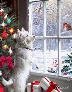 Richard Macneil This reminds me of christmas when my mom still had her dog. We would wait for the robin to stop by her garden