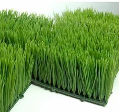 "Wheat Grass4"" Tall 6x6 Square Mats"