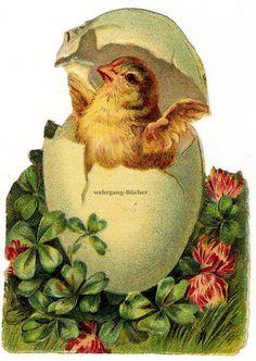 Vintage Victorian die cut paper scrap, Easter chicken slips out of egg, c. 1880.