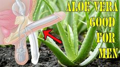 Why Aloe Vera Good For Men? Benefits Of Aloe Vera For Male Enhancement You Should Know! Health Benefits, Health Tips, Health And Wellness, Health Care, Male Enhancement Exercises, Fitness Diet, Health Fitness, Medical Prescription, Natural Cures