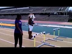 Mike The Tiger recently made it out to #LSU track practice to try his hand at hurdling.