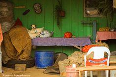 Cachorro em meio as batatas by Rosane Macedonio on 500px