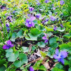 Little gems sprouting everywhere. #flowers #botanical #plants #thebotanicallife