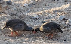 odileva posted a photo:  Damaraland. Uis