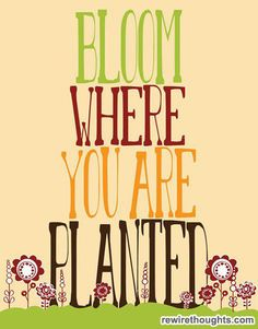 Bloom Where You Are Planted #quotes #inspirational