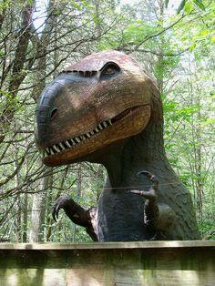 Prehistoric Forest  Marblehead, Ohio