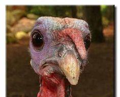 Thanksgiving Day - Turkey (7)