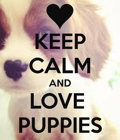 KEEP CALM AND LOVE PUPPIES