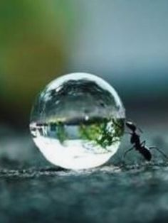 Awesome ant