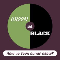 Which colour olives do we grow?