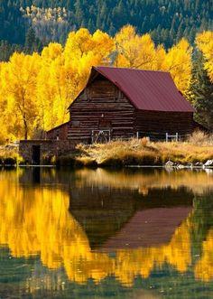 #reflection #barn #trees #yellow #lake