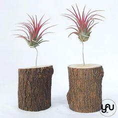 MARTURII plante aeriene cu baza din LEMN - M24 - https://www.yau.ro/collections/marturii-nunta-si-botez?page=1 - yauconcept - elenatoader