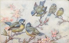 five blue/yellow/white birds on cherry blossom tree