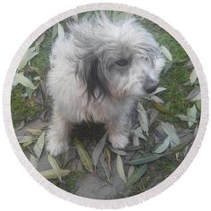 Pufy Round Beach Towel by Cotfas Doina. The beach towel is in diameter and made from polyester fabric. Beach Towel, Places To Visit, Dogs, Animals, Animales, Animaux, Pet Dogs, Doggies, Places Worth Visiting