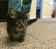 Gatito pequeño....