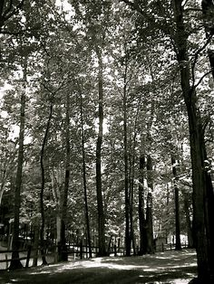 greenville PA- park Mercer County, Local Attractions, Pennsylvania, Cities, Autumn, Explore, Park, Beach, Photography