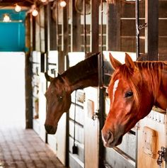 horses in their stalls at Blue Stallion Farm