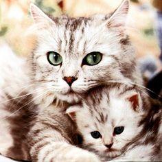 "@catsofin5tagram's photo: ""#cat #catsofin5tagram"""