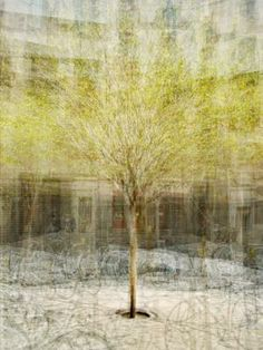 """Pep Ventosa's tree portraits are composed of multiple photographs, shot as he circles the subject. In this slide show, Ventosa tells us a bit more about his series """"In the Round - Trees,"""" his painting-like images of trees around the world."""
