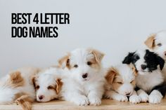 Today we have got a great list with the best 4 letters dog names only! #4LetterDogNames #DogNames Unique Female Dog Names, Best Dog Names, Cute Girl Puppy Names, Cute Names, Boy Dog, Girl And Dog, Pet Dogs, Dogs And Puppies, Pets