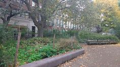 The communal gardens at Colebrook Row, Islington