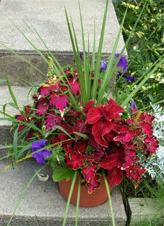 container garden with coleus