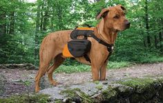Before you hit the trail with your dog, make sure your furry friend is properly outfitted for the adventure. Here's our top picks for gear that will keep your dog healthy and happy on the trail.