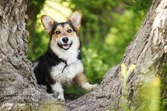 Sacramento Pet Photographer – Purple Collar Pet Photography » Kirby and Franklin