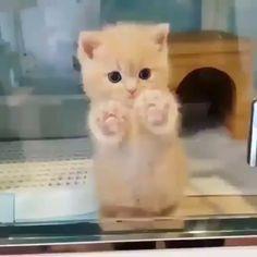 exploring adorable dancing kittens kitten kitty cute cats cat so Adorable Kitten Dancing Exploring So CuteAdorable Kitten Dancing Exploring So Cute Cute Baby Cats, Cute Little Animals, Cute Cats And Kittens, Cute Funny Animals, Kittens Cutest, Funny Cats, Cute Babies, Cats Humor, Fluffy Kittens