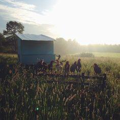 I love, love, love this blog! @homesweethomestead