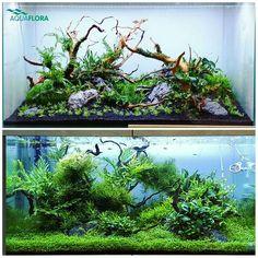 #aquarium #aquariumidea #fishtank #aquariumideas #aquariumdiy #aquariumfishfreshwater #aquariumsetup
