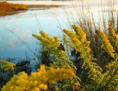 Explore Hatteras Island - Hatters Vacation Guide | Midgett Realty