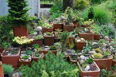 Terra Cotta Alpine Garden