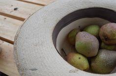 Cosecha del día, las primeras peras.