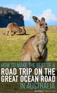 The Great Ocean Road in Victoria, Australia is one of those road trips you shouldn't miss doing in your lifetime. Here are several tips to help you plan it properly. #australia #greatoceanroad #victoria #12apostles #melbourne