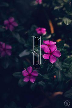 """""""TÍM YÊU"""" photo&retouch: tan T Y P O G R A P H Y / Q U O T E"""