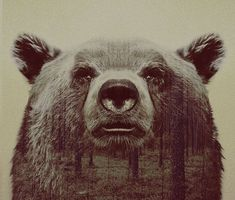 Double-Exposure Animal Portraits By Norwegian Photographer | Bored Panda