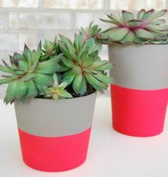 My succulents would look just as pretty as these do in their updated planters!