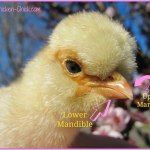 Just added my InLinkz link here: http://www.the-chicken-chick.com/2015/07/clever-chicks-blog-hop-147-with-chicken.html