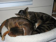 How to Deal With Redirected Aggression in Cats   Catster