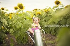 Sunflower Mini Sessions Children Photography, Family Photography, Photography Ideas, Vincent Van Gogh, Picture Ideas, Photo Ideas, Kids Modeling, Sunflower Photography, Sunflower Pictures