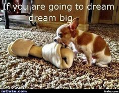 Yes!!! Always dream big. Who knows... One day you might get it just like this little guy. =)