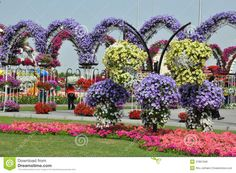 jardins da florida Dubai Miracle Garden in the UAE - Pesquisa Google