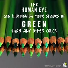 #FastFactFriday: The human eye is sensitive to light of all colors. However, it can distinguish more shades of green than any other color. That's why night vision goggles are seen with green shades!