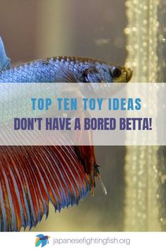 Top 10 Ideas for Betta Fish Toys - Don't have a bored betta!-- Betta fish are very inquisitive and are intelligent, they love to have items in their tank to investigate and interact with. Here are the top ten betta fish toys for your aquarium Betta Fish Toys, Betta Fish Care, Tropical Fish Aquarium, Aquarium Fish Tank, Fish Aquariums, Fish Fish, Aquarium Set, Cool Fish Tanks, Fisher