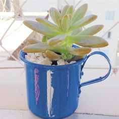 Bom dia com xícara de café cheia de vida!  #suculentas #suculovers #oitominhocas #presentecriativo #plantinhas #bomdia | contato: oitominhocas@gmail.com