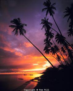 Kapuaiwa Palm Grove, Island of Molokai, Hawaii    www.tomtill.com