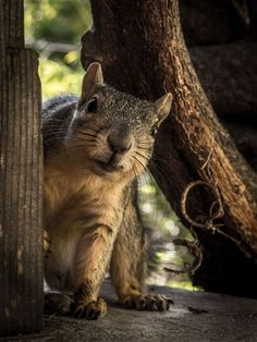 Squirrel ....very cute.