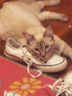 Young Calvin Kat