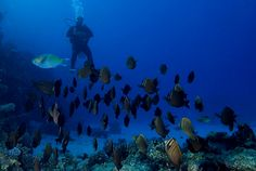 Deep Sea Dive Red Sea! #Eqypt